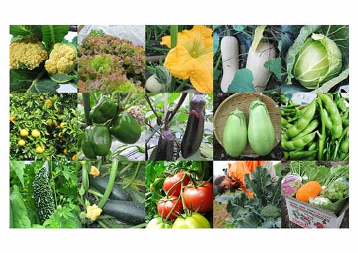 KY01-10 合馬旬鮮野菜セット