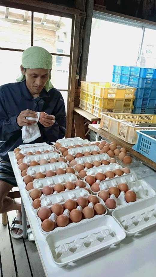 池田さん家の大自然の中で育てたこだわり平飼い有精卵 30個入(たまご)