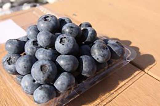 【数量限定・予約】[大粒!希少!毎年大人気商品!/数量限定・期間限定]おまたせしました!淡路島で栽培した生食用「ブルーベリー」500g×2パック