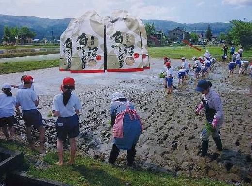【頒布会】南魚沼産(しおざわ)こしひかり8割減農薬米精米2Kg×12回