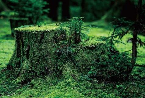 白山平泉寺の美しい苔の境内を再現したクリスタルペーパーウエイト