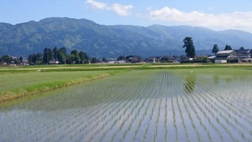 【令和元年産】富山県産こしひかり 育(はぐくみ)玄米30㎏