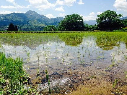 5年連続金賞関家のこだわり米5㎏南魚沼塩沢産コシヒカリ