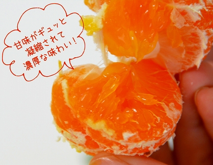 <限定>『5kg温州みかん』甘味がギュッと凝縮された「濃厚小玉みかん」