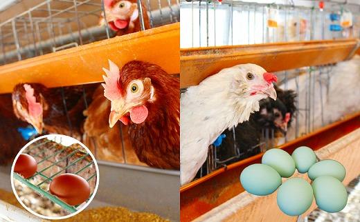 藤原さんちの赤い卵と青い卵の味比べセット