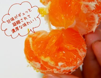 <限定>『約3kg温州みかん』甘味がギュッと凝縮された「濃厚小玉みかん」