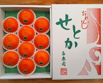 【化粧箱】『柑橘の大トロ』ハウスせとか厳選10玉入