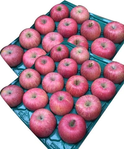 BG02山形のふじりんご秀品10kg