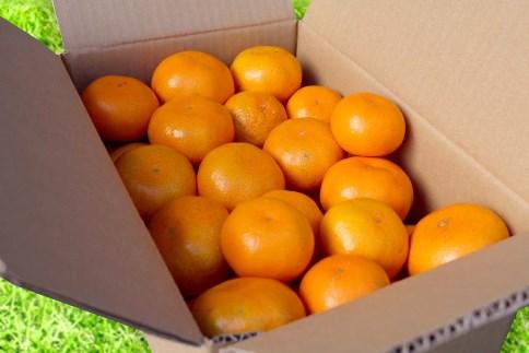 【まごころ手選別】和歌山県産 有田みかん 3kg 4箱 (2S~Lサイズ混合)
