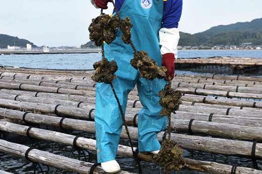 殻付き牡蠣★生食用★2kg(25粒前後)【福岡県糸島産】
