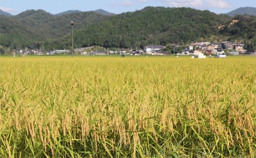 コウノトリ育むお米減農薬【5kg×4袋】(94-004)