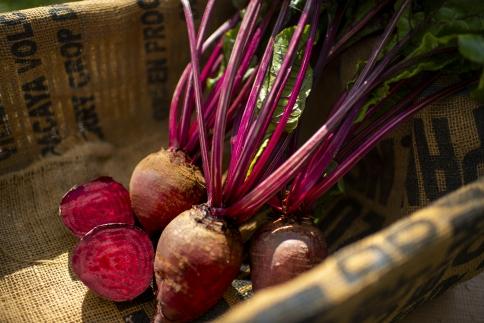 完熟スーパー野菜「赤ビーツ」(デトロイトダークレッド)3kg