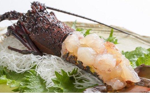 佐伯産伊勢えび1kg(2~5尾程度)急速冷凍して水揚げ直後の新鮮なままお届けします