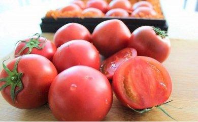 塩熟トマト KitachiROSSO 1kg(4月発送)