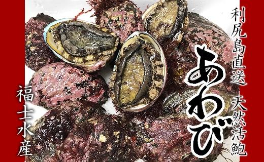 利尻島産直送!天然活あわび1kg【福士水産】
