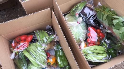 【毎月12回お届け】松戸市の4人家族から無農薬無肥料の旬の野菜定期便