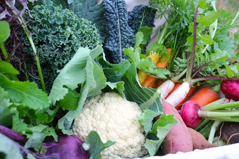 季節を彩る旬の野菜セット(農薬・化学肥料不使用)