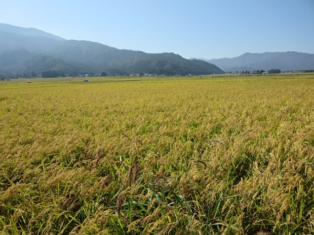 【頒布会】南魚沼産コシヒカリ梅蛍減農薬米5㎏×全6回