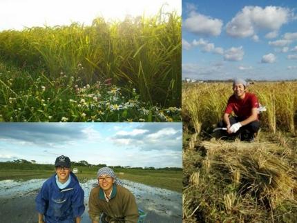 天日干し 農薬・肥料不使用 自然栽培米「ササニシキ」または「亀ノ尾」玄米 10kg