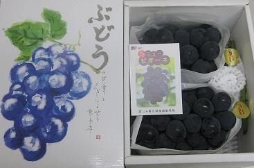 【ポイント交換】三豊市産ハウスピオーネ大房2房化粧箱り