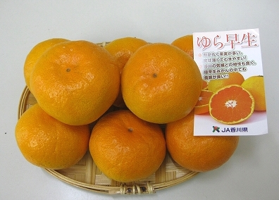 【ポイント交換】三豊市産ゆら早生みかん約5kg