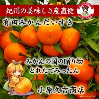 ■有田みかんだいすき赤秀10kg[M1054-C]