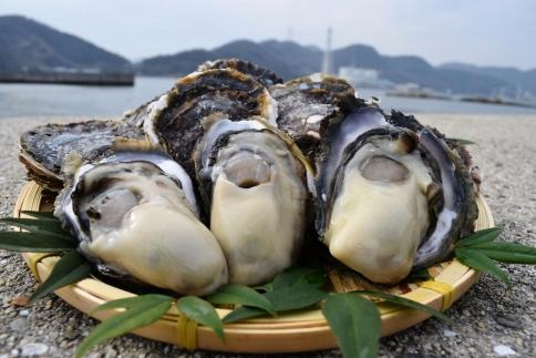 【受付終了】★期間限定★岩かき 5kg【漁師直送!】