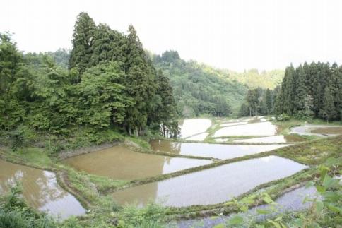 【契約栽培】南魚沼産コシヒカリ「八龍の尾」5kg