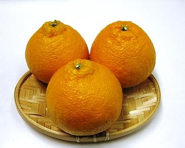 """【ポイント交換】三豊市産""""貯蔵デコポン""""約5kg"""
