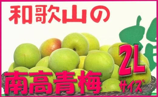 <令和元年発送>【梅干づくり用】紀州南高梅(2Lサイズ/10kg)