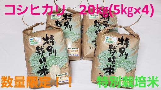 茨城県産コシヒカリ20kg(5kg×4)特別栽培米『おかだいらの恵』