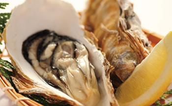 【加賀市・橋立港産】素潜り漁の天然物殻付き岩牡蠣[生食用:岩カキ]×10個(1個250~300g)