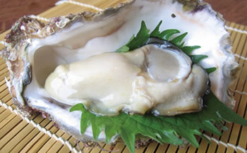 【加賀市・橋立港産】素潜り漁の天然物殻付き岩牡蠣[生食用:岩カキ]×10個(1個300~400g)