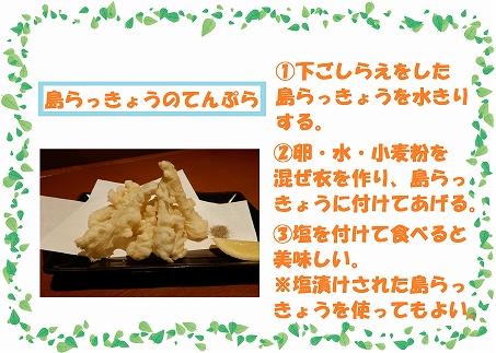 島らっきょう(500g)