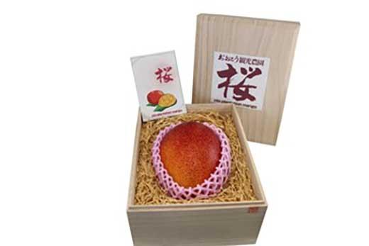【桐箱入り】完熟桜マンゴー2Lサイズ 1玉【期間・数量限定】
