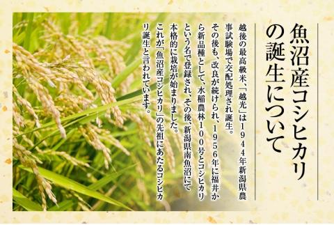 【JAみなみ魚沼頒布会】しおざわコシヒカリ「天地米」(5kg×全12回)
