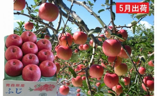 5月冷た~い最高級ふじりんご約3kg・特選クラス