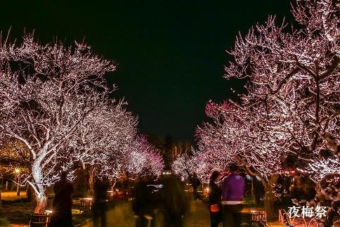 【水戸市偕楽園、弘道館等】JTBふるさと納税旅行クーポン(150,000円分)