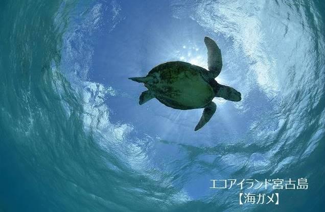 【宮古島市】JTBふるさと納税旅行クーポン(3,000円分)