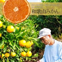 ★あそこのみかんは美味しいぞ!と同業農家がこっそり教えてくれた日高・御坊・和歌山みかん10kg