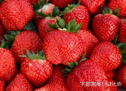 【宇都宮市】JTBふるさと納税旅行クーポン(13,500円分)