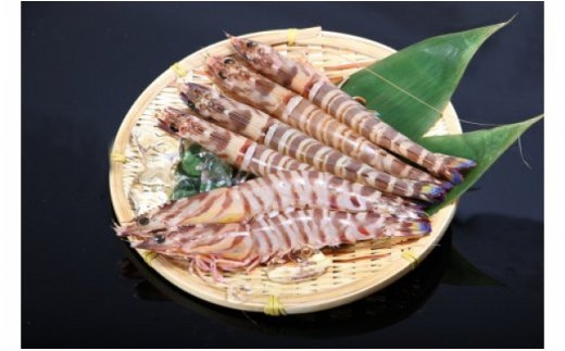 活き〆急速冷凍天然車エビ(大分県佐伯産)300g×3袋 生食用
