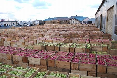 家庭用サンふじ約10kg津軽産りんご