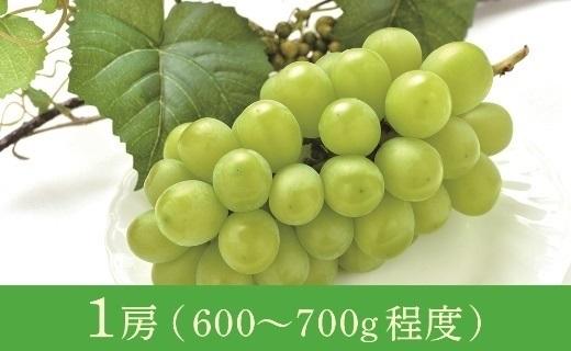 12月津軽産贈答用大粒シャインマスカット1房(600~700g程度)