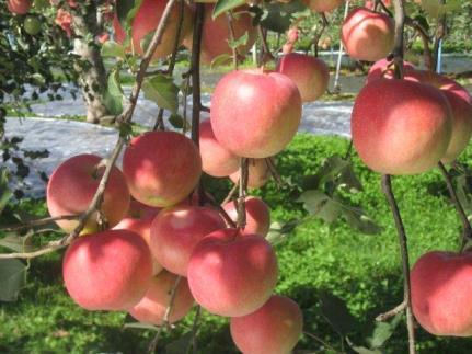 津軽のおまかせりんご約5kg2種以上