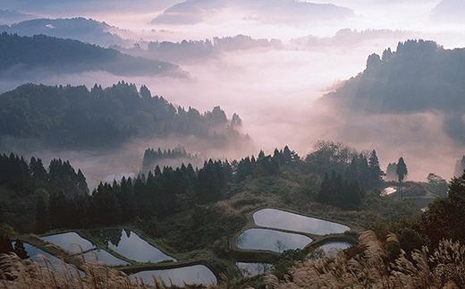 【令和元年新米先行予約】最高級魚沼産コシヒカリ「雪椿」10kg(5kg×2袋)