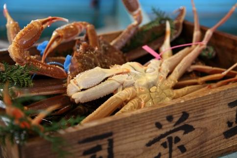北畿水産特製鍋だし付き日本海産タグ付き活松葉かに(700g~800g)