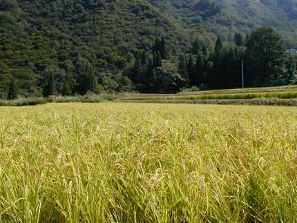 【新米予約10月発送】南魚沼産こしひかり無洗米2㎏