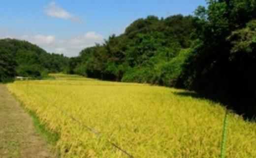 人気沸騰の米岩手県奥州市産ひとめぼれ白米玄米も可12kg