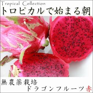 無農薬 ドラゴンフルーツ(赤)2kg